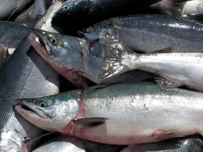 fishsite-1151