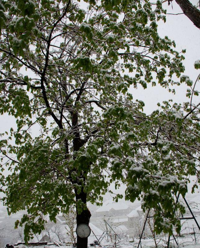 snow-tree1