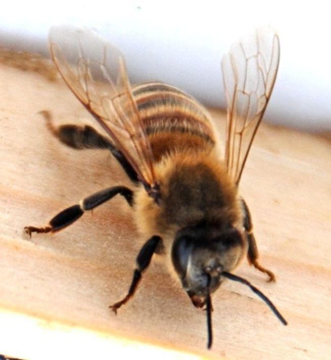 pretty-bee