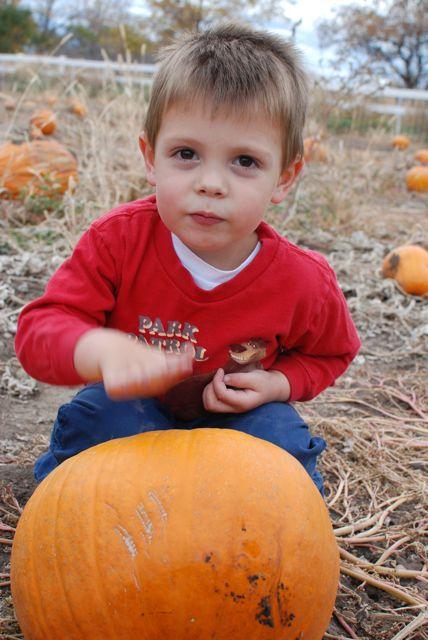 Dan 7 Pumpkin